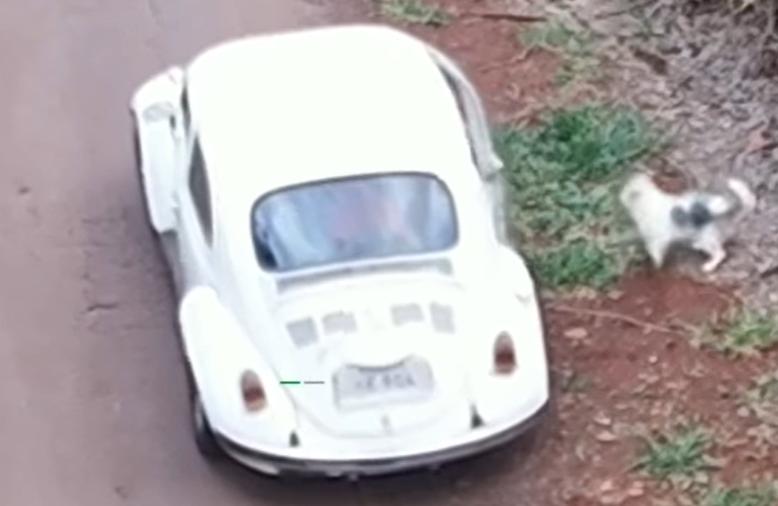 Caso de cachorrinha abandonada chega à Delegacia de Proteção ao Meio Ambiente de Curitiba