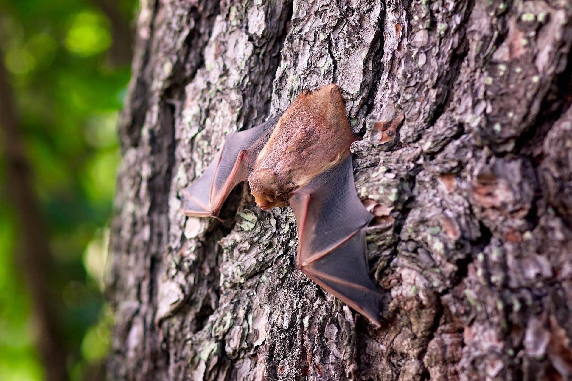 Morcego encontrado no bairro Brasilia teve resultado positivo para raiva