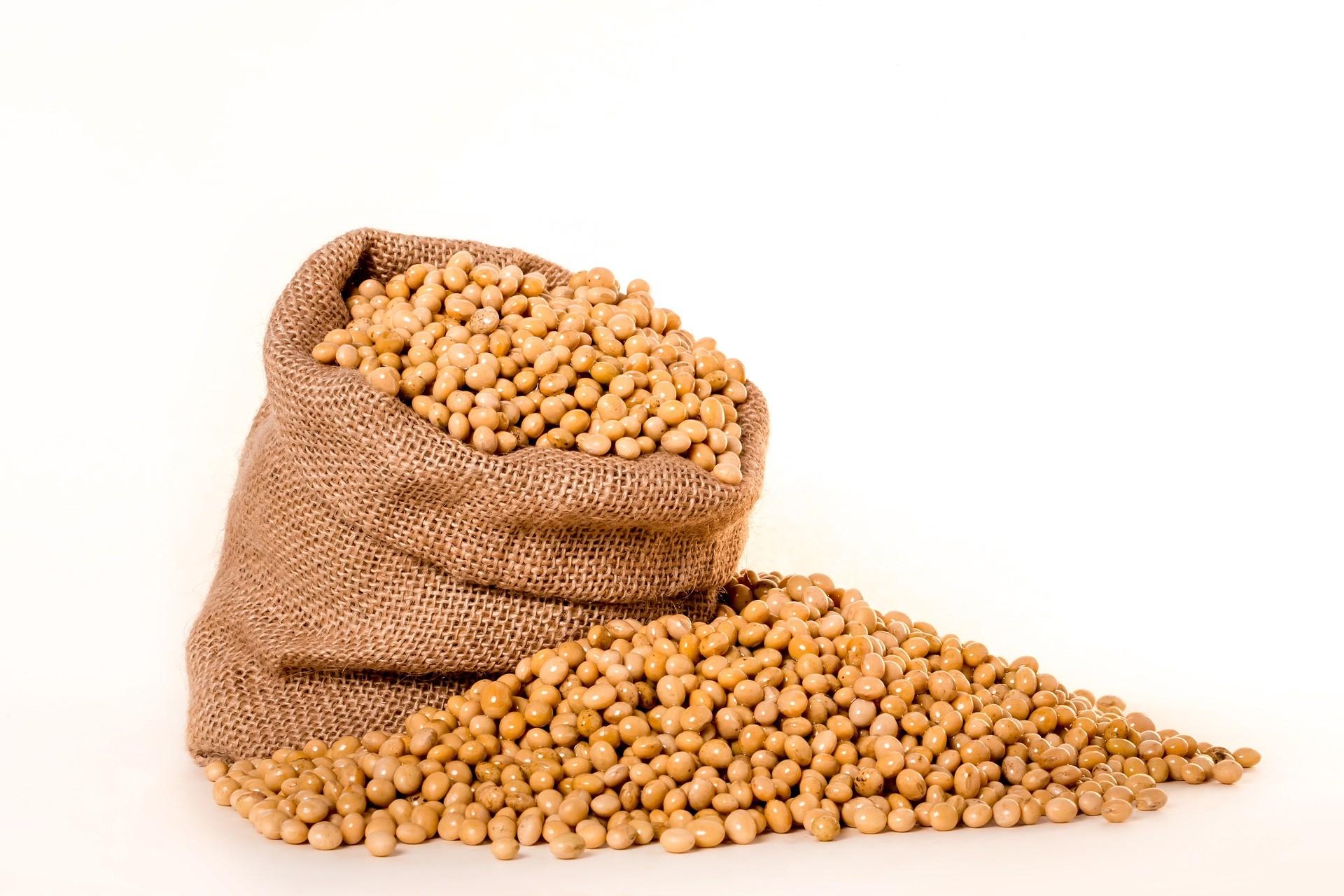 Soja registrará  pela 6ª vez como produto principal de exportação