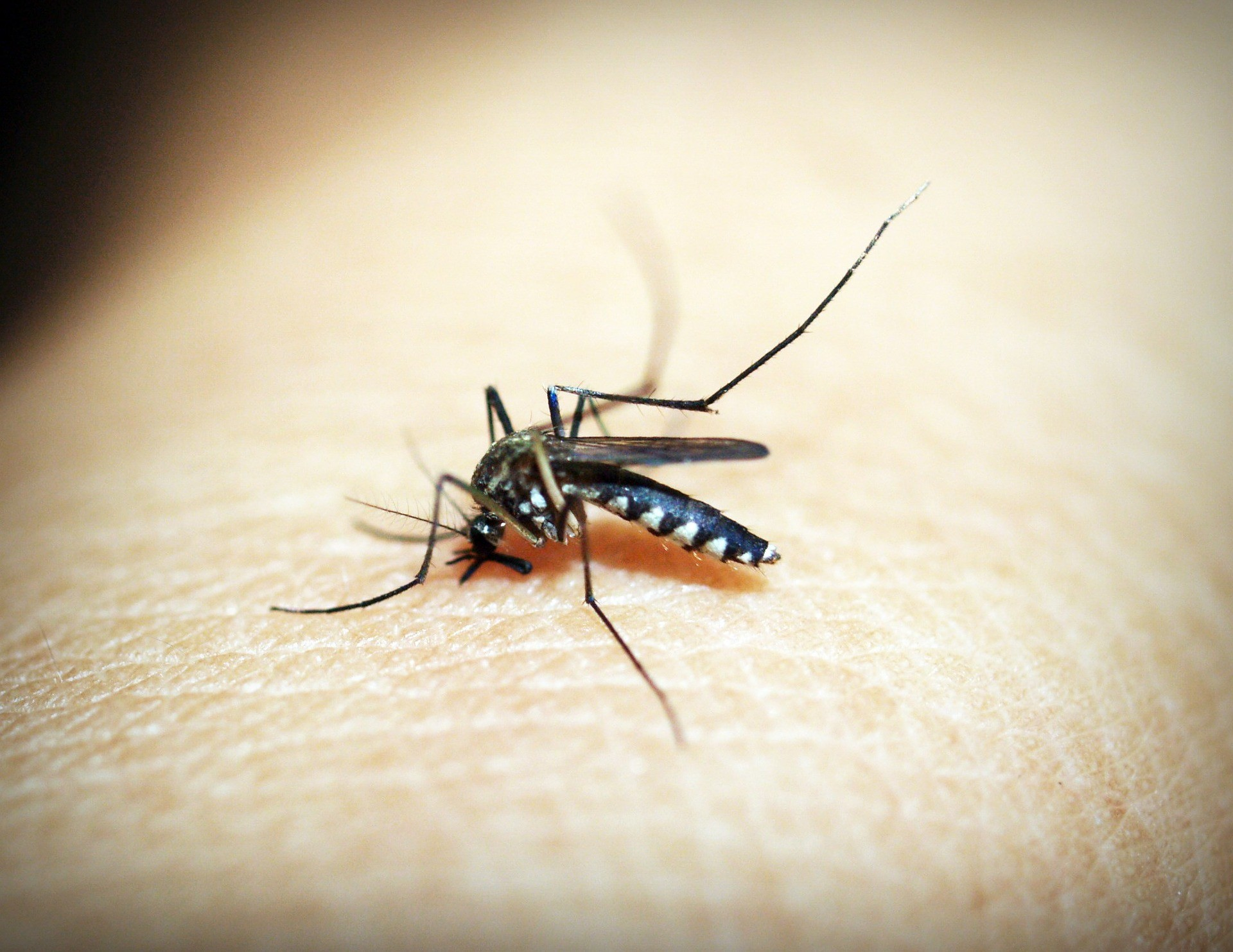 Cascavel tem 32 casos positivos de dengue em novo ciclo epidemiológico