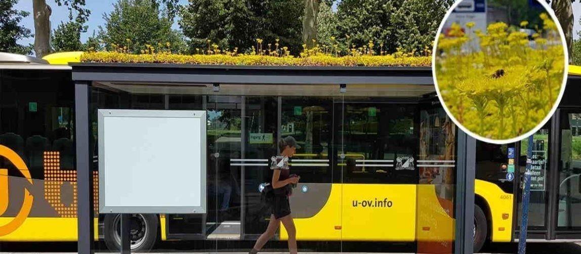 Cidade holandesa transforma pontos de ônibus para salvar abelhas