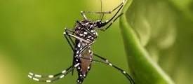 Saúde confirma 75 casos de dengue em Cascavel