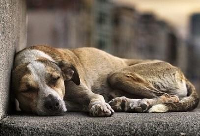 Maus-tratos a animais: denunciar a quem?