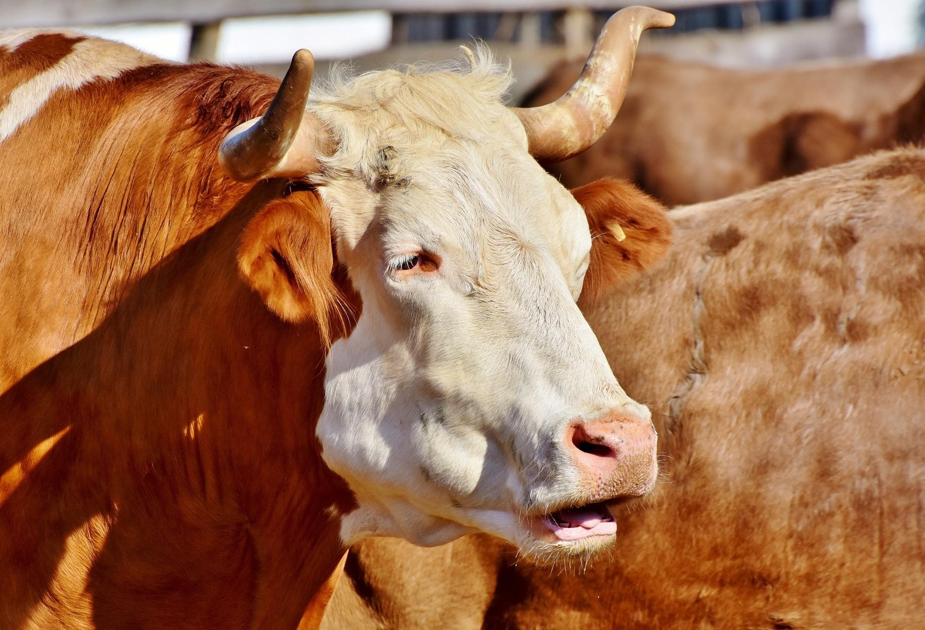 Em 2029, o Brasil deve produzir 12,6 milhões de toneladas de carne bovina