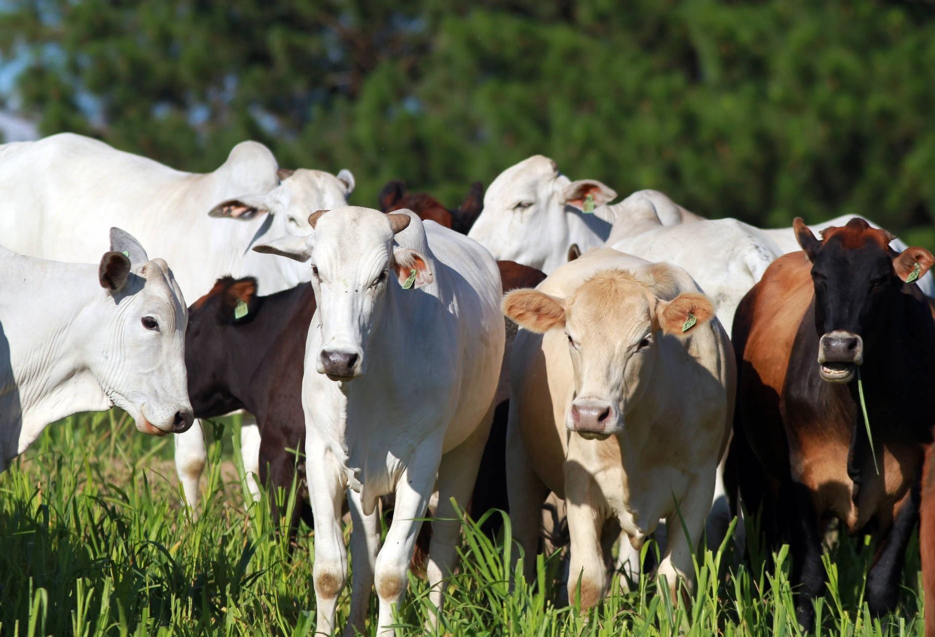 União de forças permitirá ao Paraná vencer no mercado de proteína de origem animal