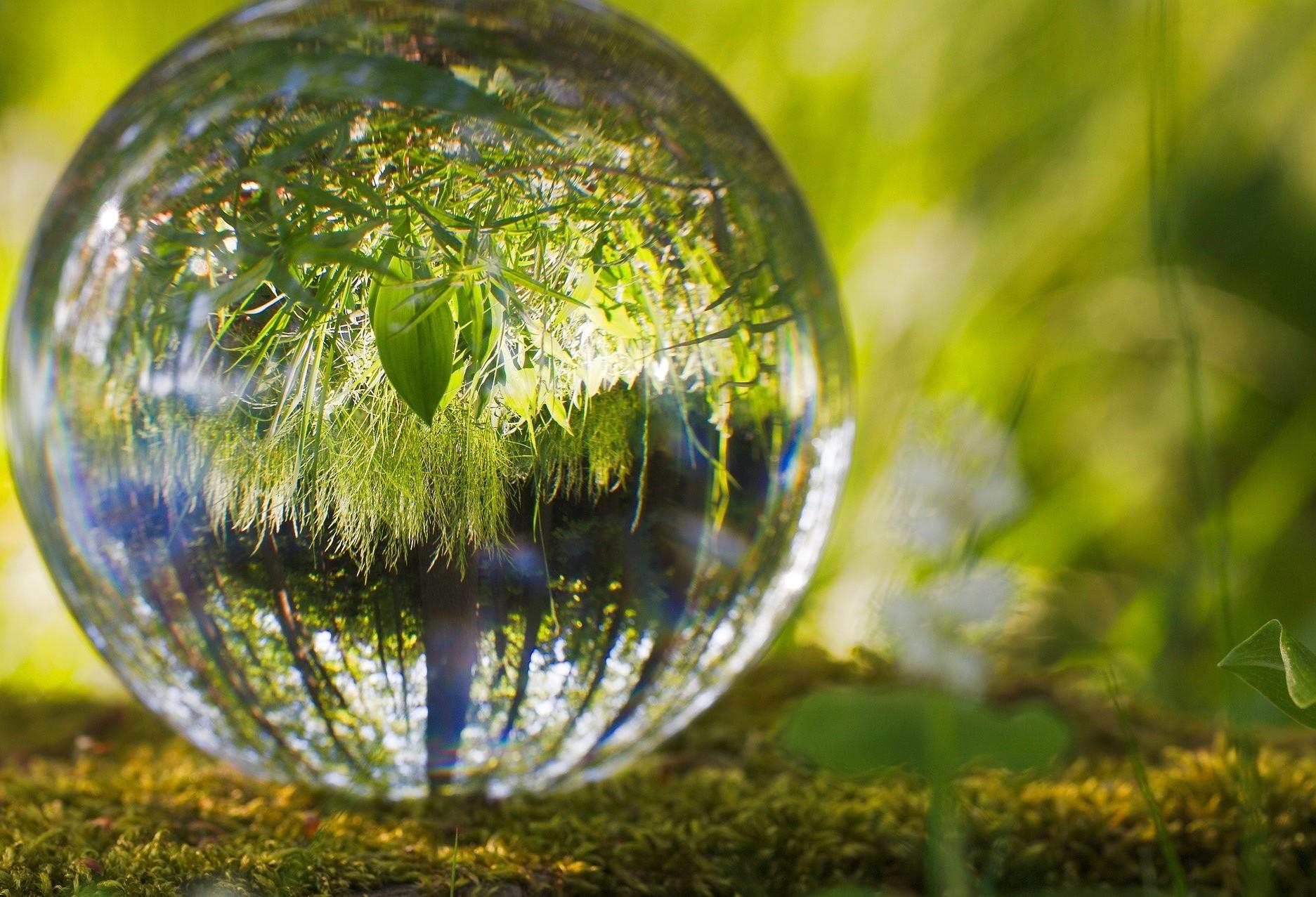 Dia Mundial do Meio Ambiente: restauração de ecossistemas