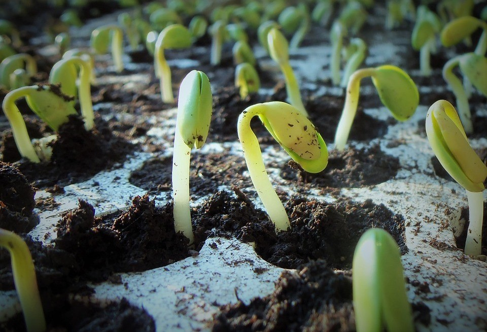 Paraná deve plantar 1% a mais de área com soja na safra de verão