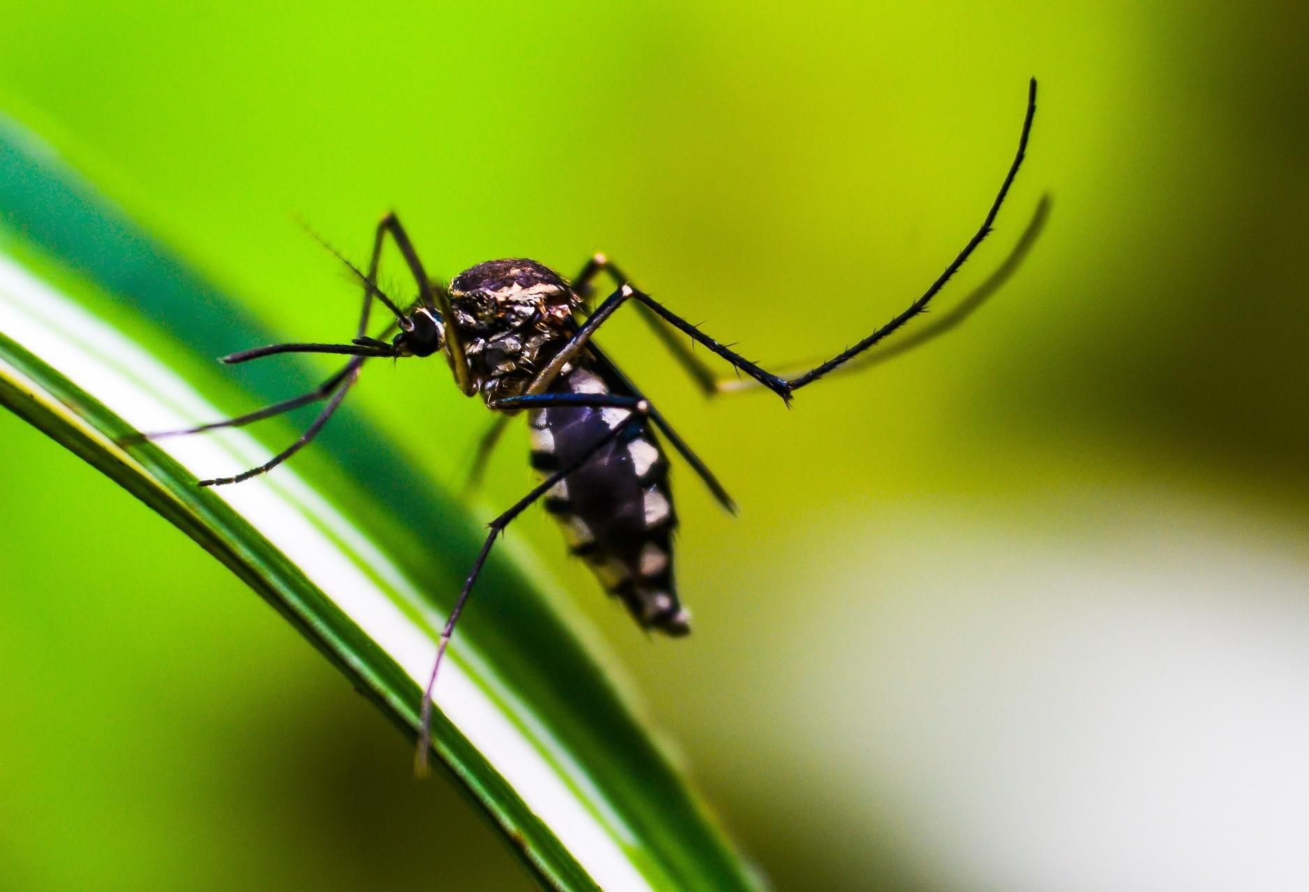 Cascavel registra 6 casos de dengue