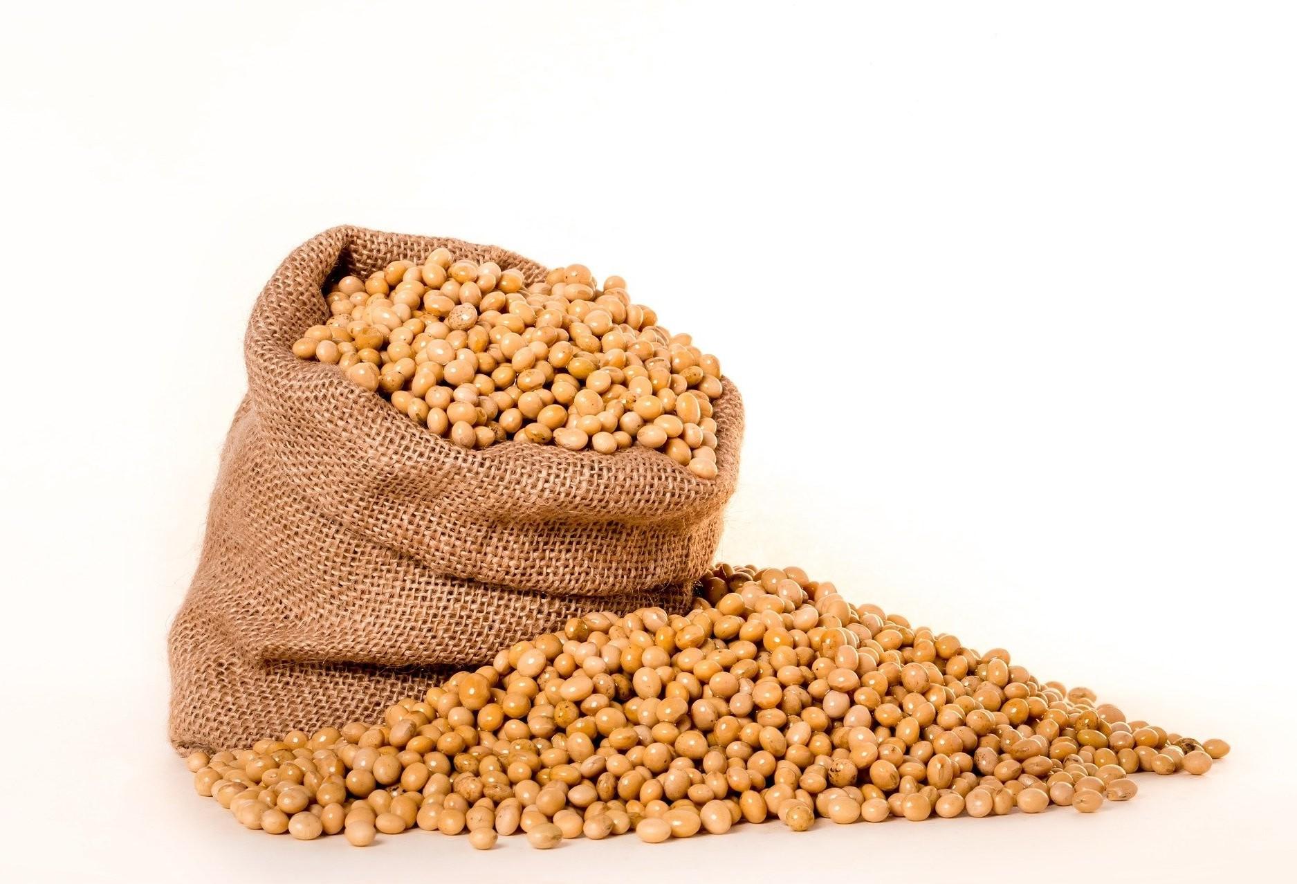 Exportações de soja devem alcançar 9 milhões de toneladas
