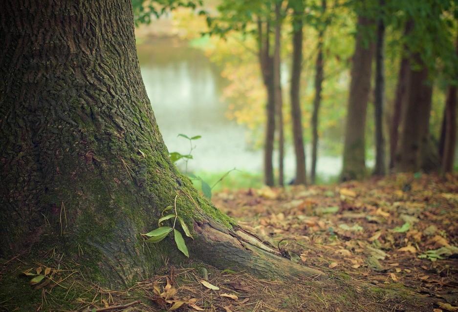 Cascavel celebra  Dia da Árvore com plantio de árvores frutíferas