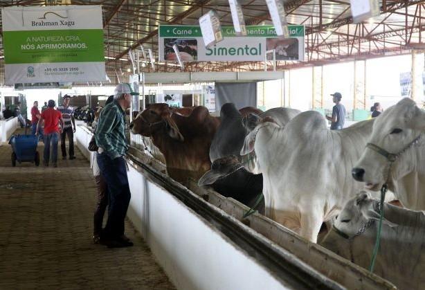 Paraná livre de febre aftosa é  tema do ultimo dia do Show Pecuário