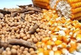 Mesmo com a chuva, plantio de soja e milho vai atrasar na região