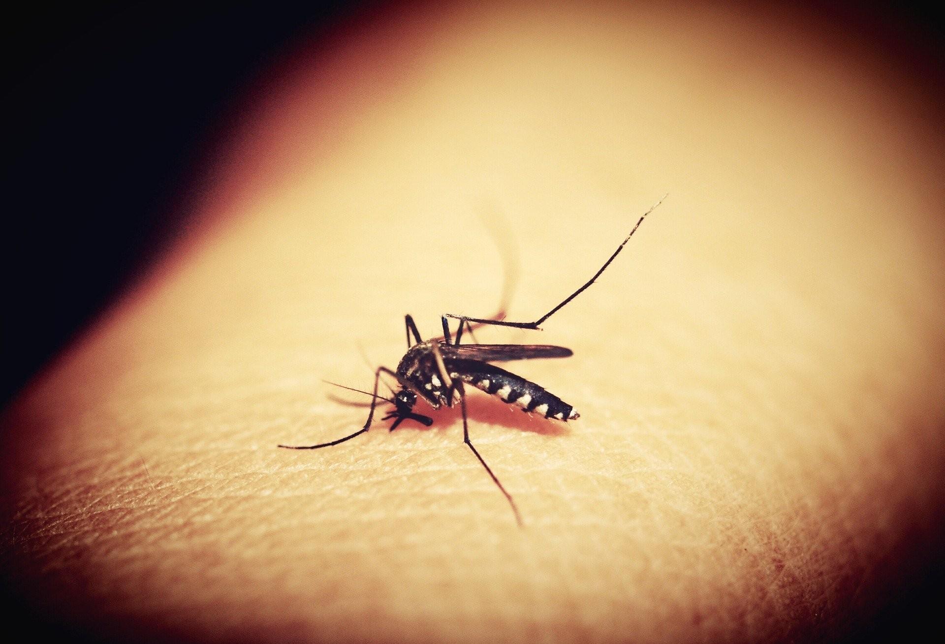Cascavel chega a 1.142 casos confirmados de dengue