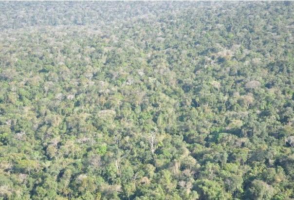 MPF sobrevoa Parque Nacional do Iguaçu e constata regeneração da floresta na Estrada do Colono