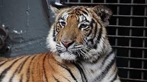 Zoo de Cascavel volta a ser fechado nesta quarta-feira