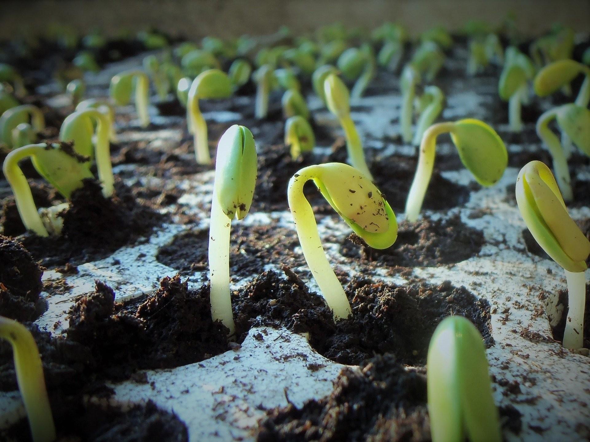Plantio da safra 2021/2022 de soja apresenta bom avanço no Brasil