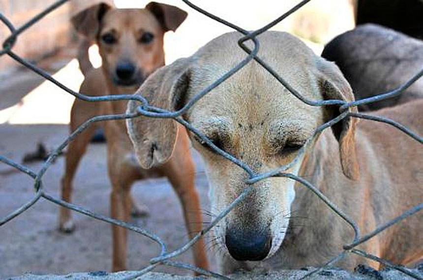 Maus tratos a animais aumentaram durante a pandemia