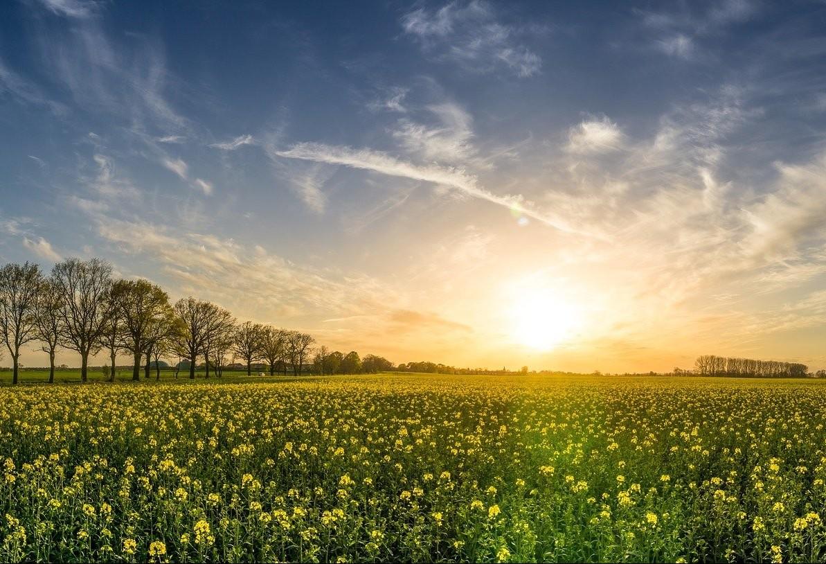 Cédula do produtor rural protege florestas