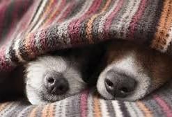 Inverno demanda cuidados extras com os animais