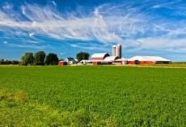 Safra de soja americana cai 20% em 2019/2020