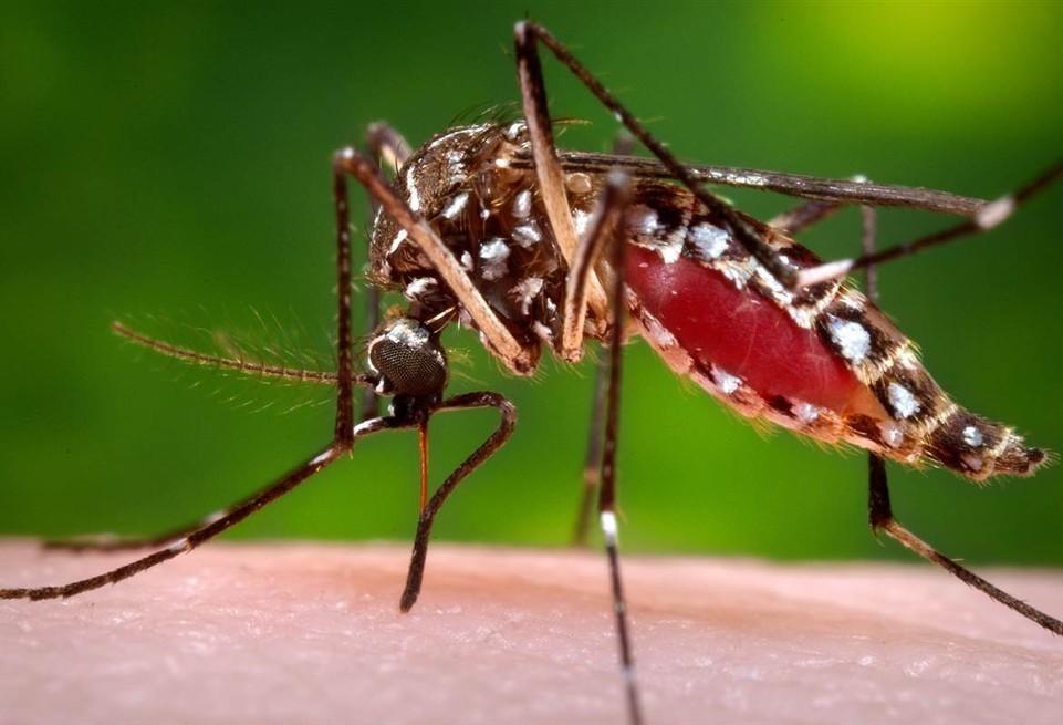 Cascavel registra 56 casos de dengue
