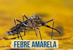 Dia D - Vacinação contra febre amarela