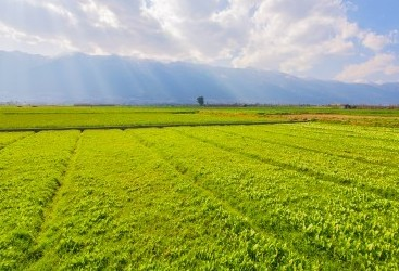 Agropecuária sofre com o mercado, mas mantém boa expectativas
