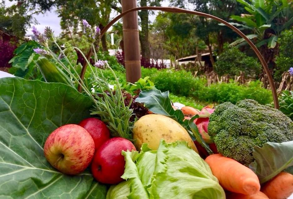Fundetec, Tecpar e Biolabore assinam contrato para certificar produtores orgânicos
