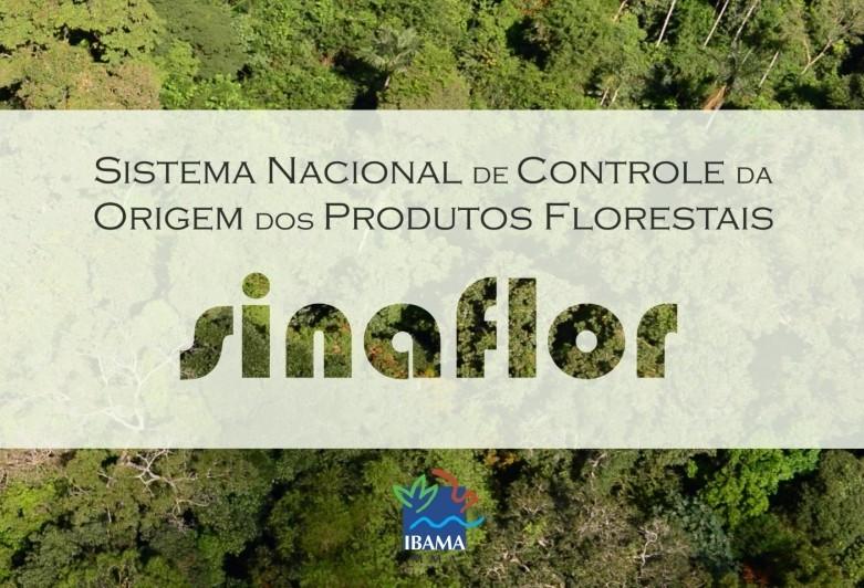 Sinaflor: Paraná é o maior número de empreendimentos cadastrados no sistema