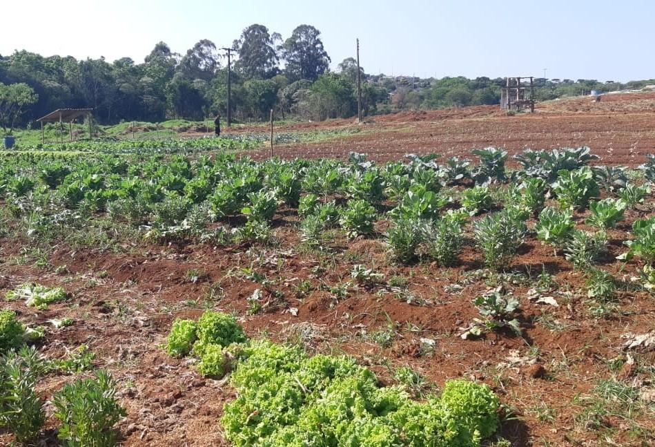 Dia Mundial da Alimentação é marcado com  ações em horta urbana